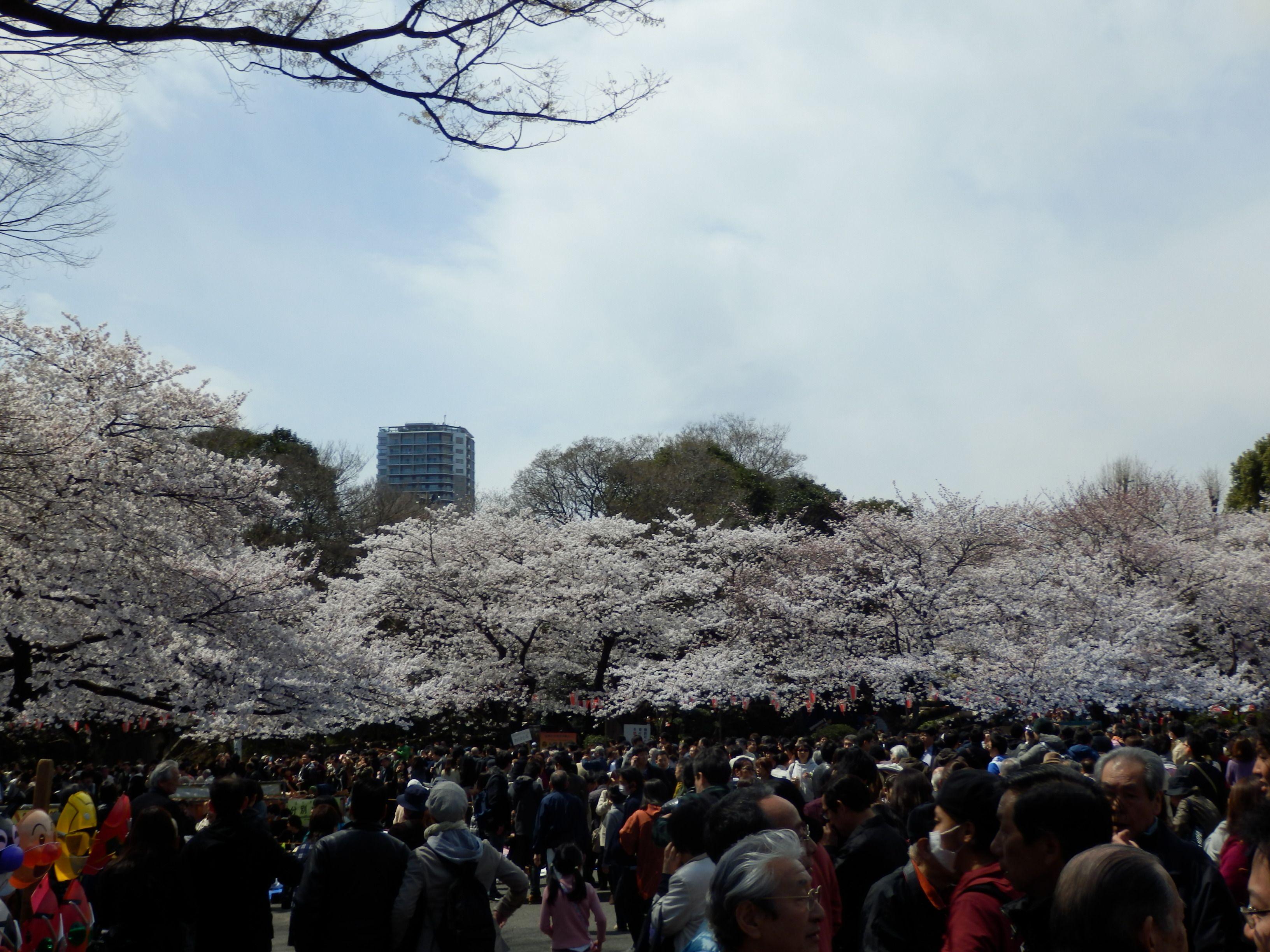 翌日の上野公園.jpg